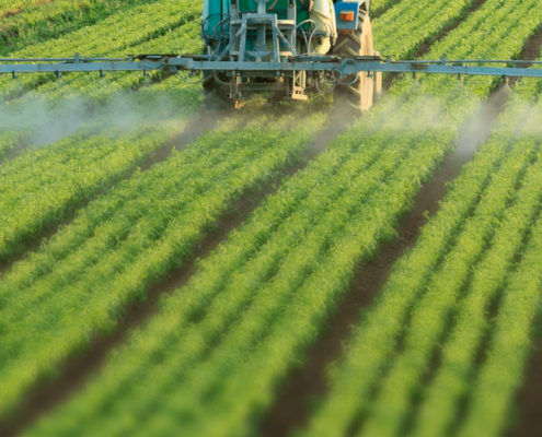 glyphosate classified as not carcinogenic